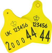 cattle_tags